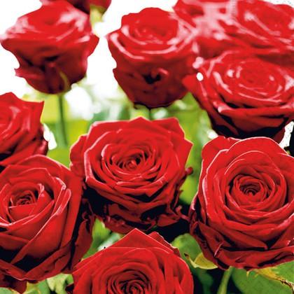 Салфетки для декупажа Великолепные розы, 33x33см, 3 слоя, 20шт Paper+Design LN0736