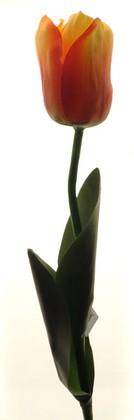 """Цветок искусственный Тюльпан """"Эн Росарио"""" розовый, 65см Top Art Studio WAF0327-TA"""
