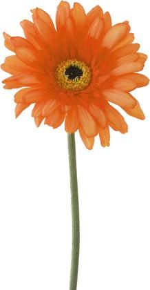 """Цветок искусственный """"Гербера оранжевая"""" 62см Floralsilk BB21184FLA"""