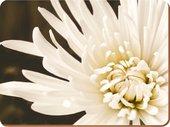 """Набор подставок на пробке """"Белая xризантема"""" 29x22см, 6шт Creative Tops TM1943MUV"""