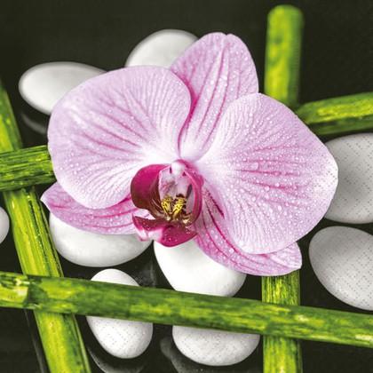 Салфетки для декупажа Орхидея, 33x33см, 3 слоя, 20шт Paper+Design LN0870