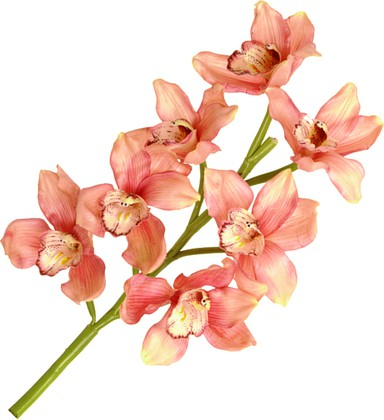 """Floralsilk Искусственные цветы """"Орхидея розовая"""", длина 55см, артикул 11420RUB"""
