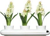 Горшок для цветов SagaForm Kitchen Трио 5015274