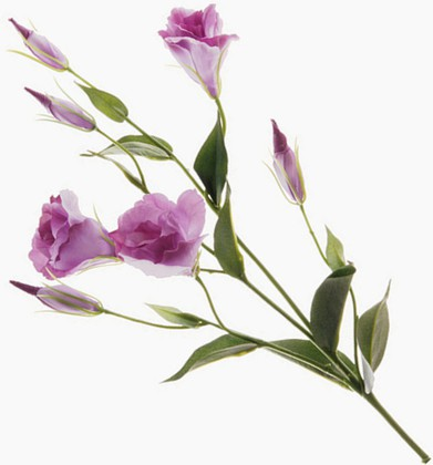 """Floralsilk Искусственные цветы """"Лизиантус лавандовый"""", 76х24см, артикул BB21305LV"""