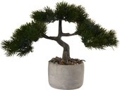 Бонсай Сосна Asa Selection Bonsai в горшке h24.5x14.5 66221/444