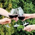 Бокалы для вина Tescoma Uno Vino, 6шт., 350мл 695494.00