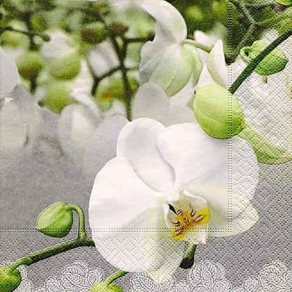 Салфетки для декупажа Фестиваль орхидей, 33x33см, 3 слоя, 20шт Paper+Design LN0605