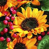 Салфетки Осеннее поздравление, 33x33см, 3 слоя, 20шт Paper+Design 22011