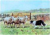 Доска стеклянная Колли-пастуx 30x40см The Leonardo Collection LP22716