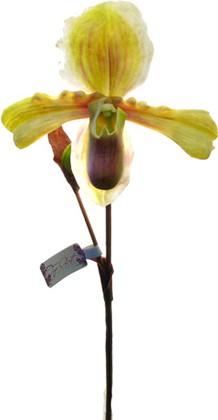 Цветок искусственный Башмачок зеленый Top Art Studio SP-002-25S-3