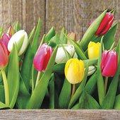Салфетки для декупажа Paw Тюльпаны 33x33см, 20шт SDL079100