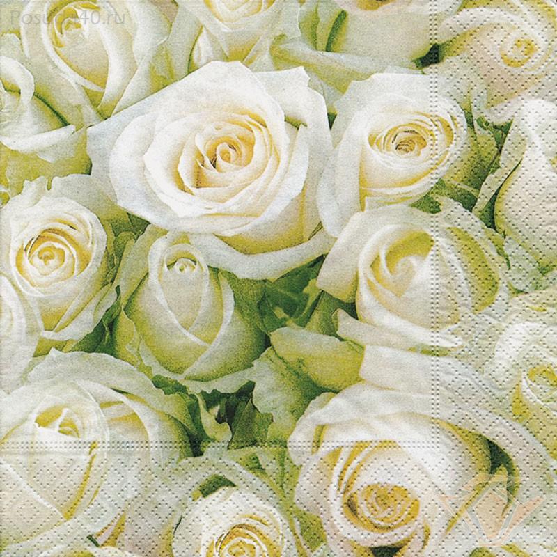 Картинка белые розы, картинки