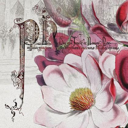 Салфетки для декупажа Paw Великолепная роза, 33x33см, 20шт SDL083800