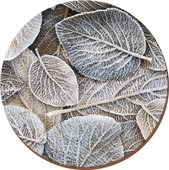 Подставки под тарелки на стол Creative Tops Морозная листва d29см, 4шт, пробка 5162900