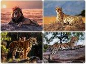 Подставки на пробке Lesser & Pavey Сафари Большие кошки 4шт 29x22см LP94023