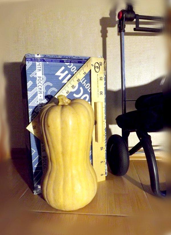Сумка-тележка LOGIC RG PAC067azul от Rolser, почтовый короб №6 (425х265х190мм) и небольшая (ок. 30 см) тыква